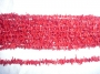 Red_Coral_twigs_503c4da564c2e.jpg